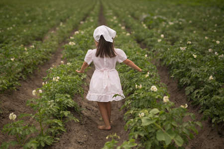 Young potato plant growing on the soil. A girl on a potato plantation. Pest-free flowering potato beds. The key to healthy, high - quality seedlings is a nutritious soil with organic fertilizers.