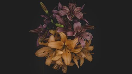 Yellow flowers on dark background. Beautiful lilies
