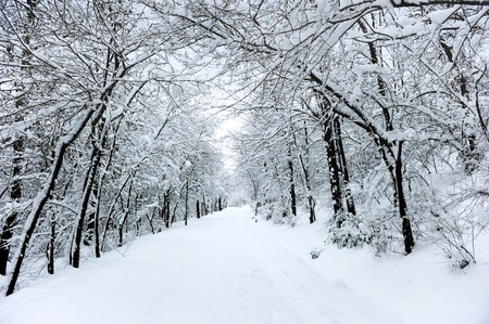 Winter road covered with fresh snow Stock Photo - 8238058