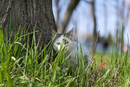 Little cat hiding in the grass photo