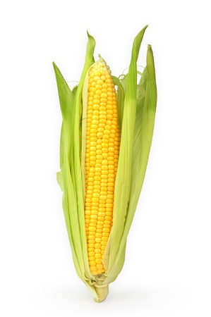 Isolated ear of Corn Stock Photo - 10073259