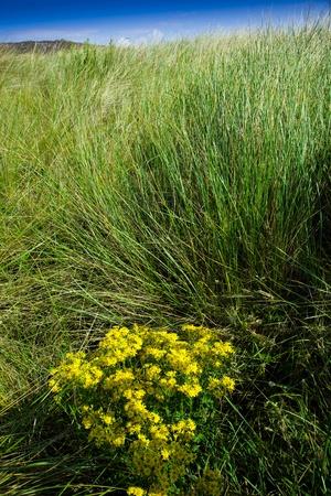 flores de color amarillo en la hierba del campo