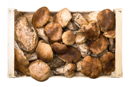 mushrooms and raw mushrooms isolated on white background Stock Photo