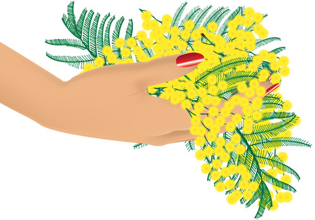 mimosa: graphic illustration of a mimosa