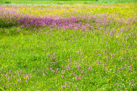 a flowery meadow in the high mountains Stock Photo
