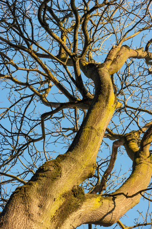 instance: a winter tree on blue sky