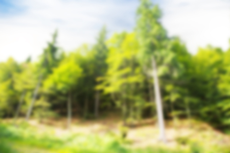 forest background with intentional blur Stock Photo