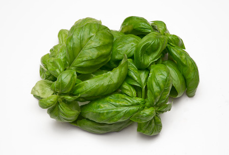 leaves of fresh basil on white background Stock Photo