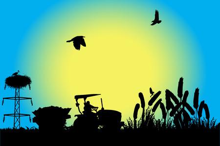 cosechadora: Trabajando en campo