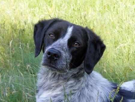Portrait of a sad dog photo