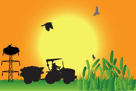 agricultural equipment: Working in field  Illustration