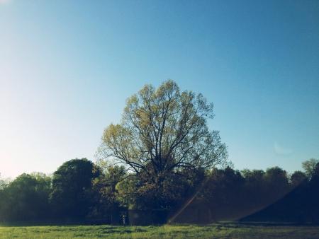 Big tree  Imagens