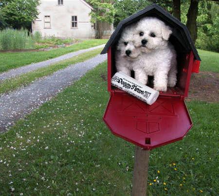 Bichon Frize Puppy 스톡 콘텐츠 - 793195