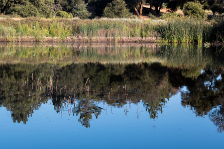 Scenic pond w oak pine trees reeds reflected in quiet, serene, blue water in southern California mountains