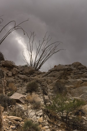 Rocky desert trail under dramatic thunder cloud sky, silhouette of ocotillo cactus at the top of a steep hill