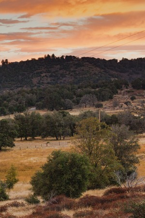 Early morning sunlight on hills in autumn, grove of live oaks foreground, sunrise sky of orange, yellow, gold, red, vertical format Stock Photo