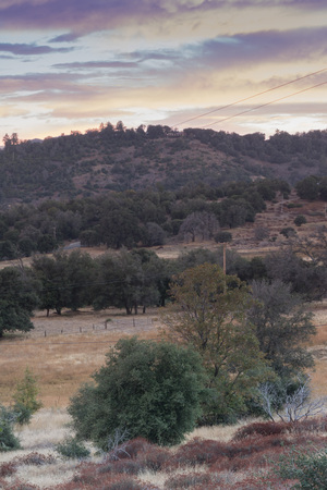 Early morning sunlight on hills in autumn, grove of live oaks foreground, cool color beautiful sunrise sky of lavender, yellow and soft blue tones, vertical format