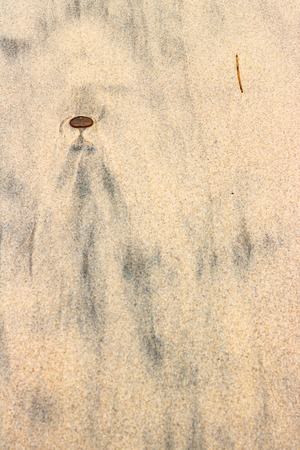 Black silt patterns in beach sand looking like alien, angel person 스톡 콘텐츠