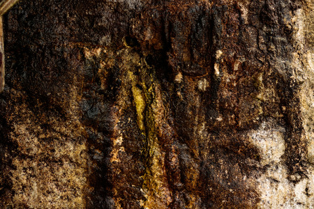 Nature background texture of a wet mossy sandstone wall
