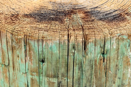 Above view of tree rings and side view of weathered wood pier, a background vintage grunge texture of faded paint, a detailed rough surface