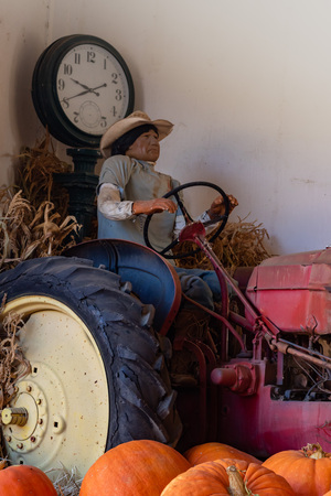 Vintage manikin of hispanic native amercian farm worker driving an old antique tractor with large orange pumpkins in the foreground and a retro black scale