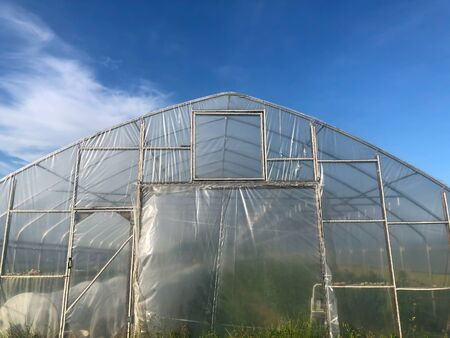Front of a greenhouse under a big blue sky with green vegetation inside in sunlight with copy space.
