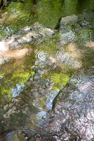 Abstract full frame image of green foliage and blue sky reflecting in a forest stream.