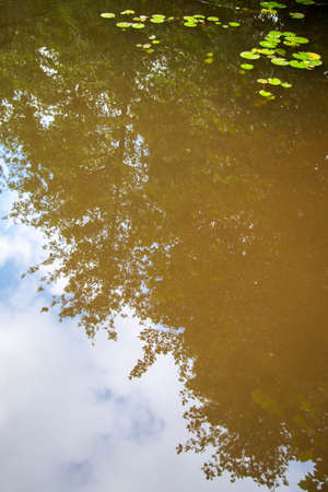 Abstract forest reflection in pond with lily pads. Archivio Fotografico