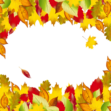 fall background: Vector of autumn  colorful leaves. Fall background Illustration