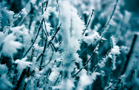 Winter leaves in the frost. Abstract background.