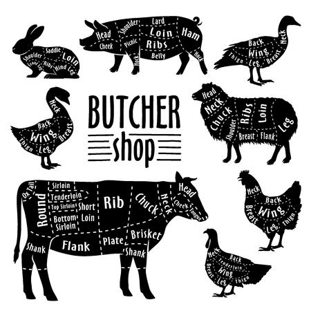 Taglio di carne, schema per macellaio. Poster per macelleria. Guida per il taglio. Illustrazione vettoriale. Vettoriali