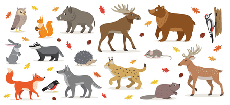 Big set of forest woodland animals isolated vector illustration