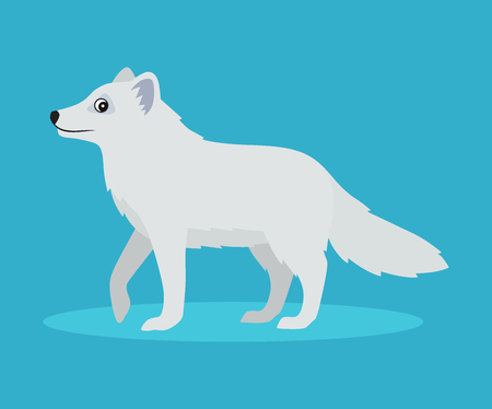 Cute arctic fox or polar fox icon, isolated on blue background, wild snow furry beast, vector illustration in flat style.
