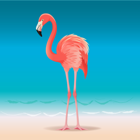 Exotic pink flamingo walking on the hot summer beach. Pink flamingo vector illustration