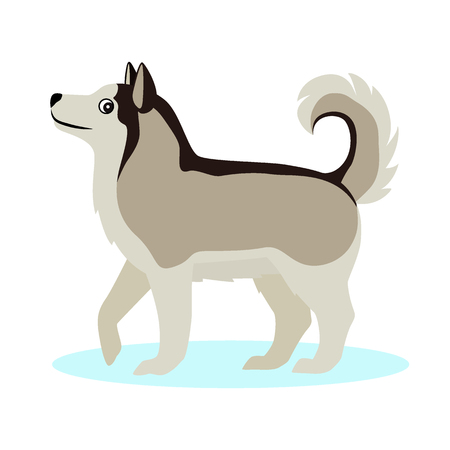 Pretty Alaskan Malamute icon, big furry dog, friendly pet, isolated on white background, vector illustration 일러스트