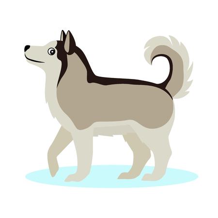 Pretty Alaskan Malamute icon, big furry dog, friendly pet, isolated on white background, vector illustration Illustration