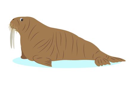 Walrus icon, big marine mammal, isolated on white background, strong animal with white tusks, vector illustration Illustration