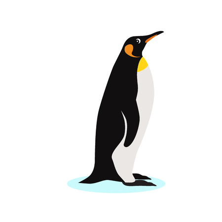 Cute King penguin icon, isolated on white background, adult bird, decorative element, vector illustration Ilustracja