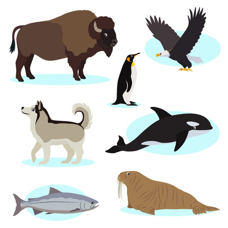 Set of cute wild animals icon for design and decoration, isolated on white background, bald eagle, buffalo, king penguin, Alaskan Malamute, orca, king salmon, walrus, vector illustration