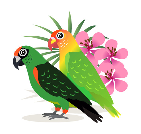 Two beautiful colorful parrots lovebird with pink flowers isolated on white background, exotic birds, vector illustration in flat style