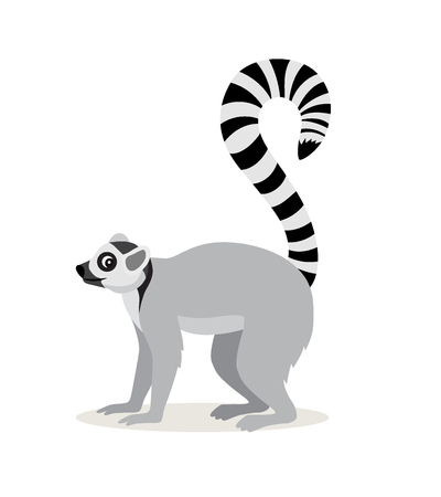 African animal, cute lemur with striped long tail icon isolated on white background, vector illustration in flat style
