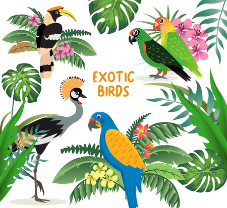 Exotic birds set, crowned crane, colorful parrots lovebirds and blue with yellow wings macaw, friendly great hornbill, leaves and flowers, vector illustration