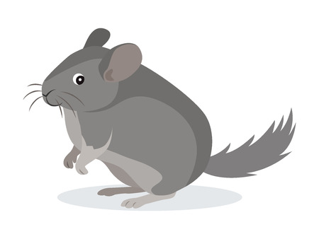 Cute gray chinchilla icon, fluffy pet, domestic animal, rodent, vector illustration in flat style