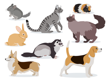 Pets icon set, cute gray chinchilla, fluffy ferret, smooth coated and domestic long-haired cats, corgi, beagle, dogs, rabbit, guinea pig isolated, vector illustration in flat style