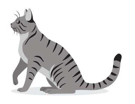Smooth coated tabby cat with long tail icon, cute gray pet, domestic animal, vector illustration in flat style