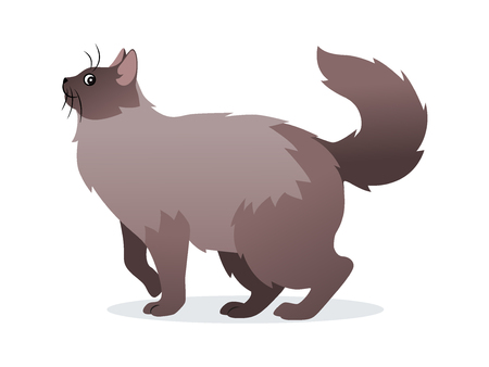 Long-haired cat with long fluffy tail icon, pet isolated on white background, domestic animal, vector illustration in flat style  イラスト・ベクター素材