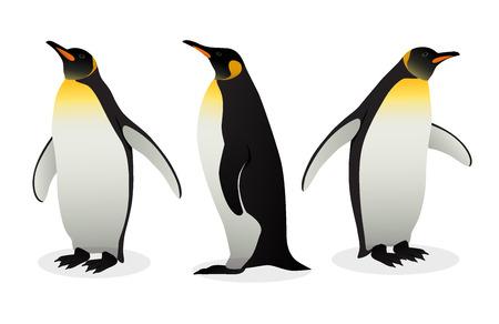 Bandada de pingüinos emperador sobre fondo blanco. Las especies de pingüinos más altas y pesadas. Ilustración de vector antártico en estilo plano.
