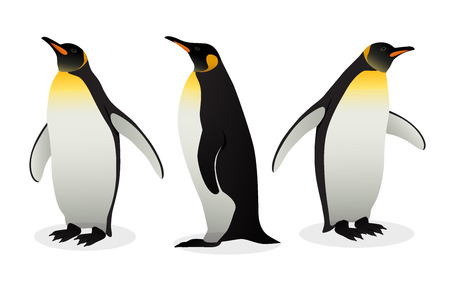 Troupeau de manchots empereurs sur fond blanc. Les espèces de pingouins les plus grandes et les plus lourdes. Illustration Vectorielle Antarctique Dans Un Style Plat.