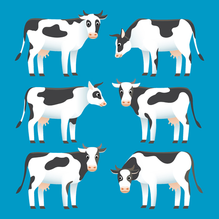 Set of cute black and white spotted cows isolated on blue background, farm animal, livestock, vector illustration flat style
