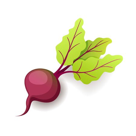 Sweet fresh beet with green leaf icon isolated, organic healthy food, vegetable, vector illustration Stock fotó - 130026109